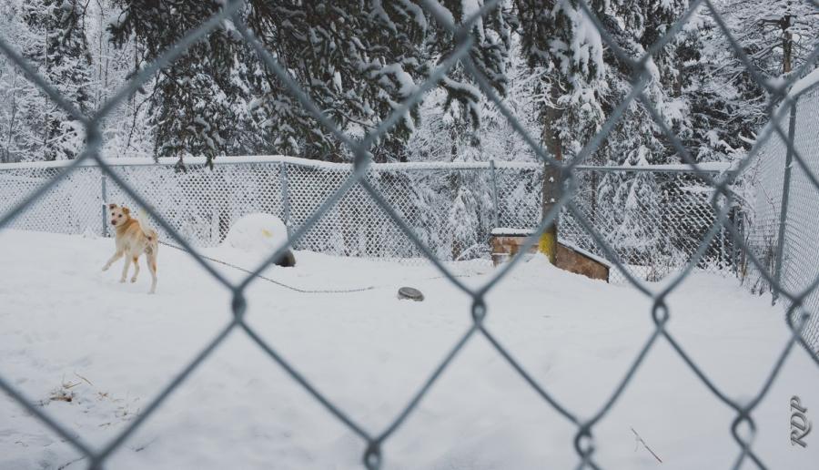 alaska Site_-61